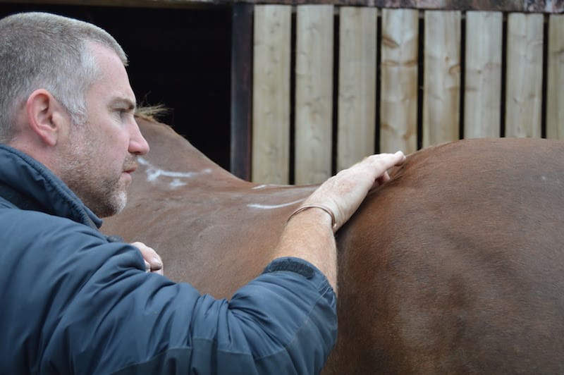 Tim Bradford with his hand placed gently on a horse's back.